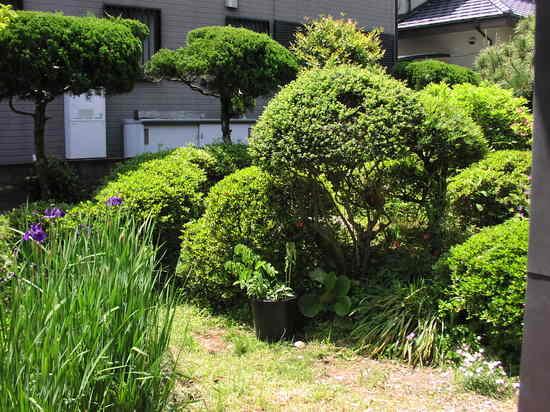 庭の様子.JPG