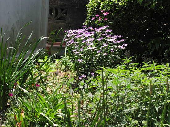 庭の花6.JPG