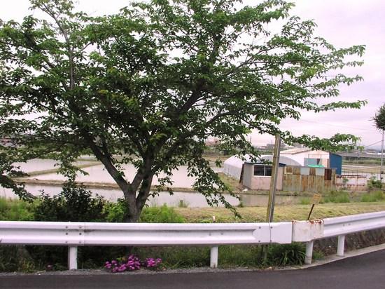 前の景緑.JPG